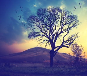 near_the_tree_by_tomatokisses