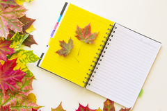 open-notebook-autumn-leaves-yellow-page-around-white-background-flat-lay-top-view-77258982